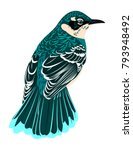 beautiful bird with motley... | Shutterstock .eps vector #793948492