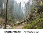 Some Fallen Trees After A Stor...