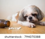 Stock photo sick dog white medicine pills spilling out of bottle on wooden floor with blurred cute shih tzu 794070388