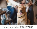 Stock photo a smiling labrador dog sitting with a family 794107735