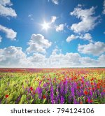 meadow of wheat and poppy.... | Shutterstock . vector #794124106
