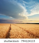 meadow of wheat. nature... | Shutterstock . vector #794124115
