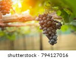 close up view of fresh red wine ...   Shutterstock . vector #794127016