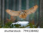eagle owl landing on snowy tree ... | Shutterstock . vector #794138482