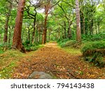 A Wide  Footpath Covered With...