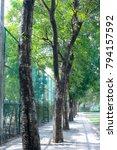 tree row in park | Shutterstock . vector #794157592
