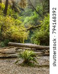 valley in the redwood national... | Shutterstock . vector #794168392