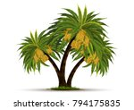 date palm on white background | Shutterstock .eps vector #794175835