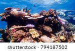 Colorful Corals In Shallow...