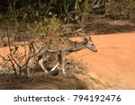 axis deer in yala national park ... | Shutterstock . vector #794192476