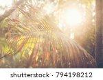 hot springs in national park... | Shutterstock . vector #794198212