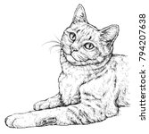 Hand Drawn Portrait Of Cute Cat....
