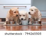 Puppies Eating Food In The...