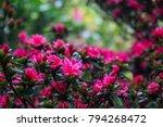 beautiful wildlife flowers in... | Shutterstock . vector #794268472