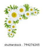 daisy flowers corner...   Shutterstock . vector #794276245