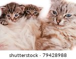 Mother cat and her kittens - stock photo