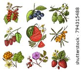 set berries. raspberry ...   Shutterstock .eps vector #794315488