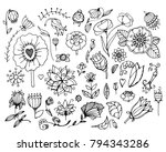 set of various fabulous flowers ... | Shutterstock .eps vector #794343286