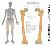 male hip bone anatomy. anterior ...   Shutterstock .eps vector #794492662