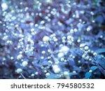 grass flower with sunset light  ...   Shutterstock . vector #794580532