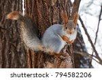 Squirrel In A Winter Fur Sits...