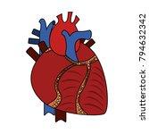 human heart organ | Shutterstock .eps vector #794632342