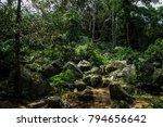 green summer jungle | Shutterstock . vector #794656642