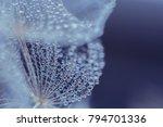 Beautiful Dew Drops On A...
