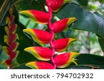 colorful exotic flower  parrots ... | Shutterstock . vector #794702932