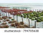 Rows Of Seaweed On A Seaweed...
