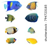 Small photo of Angelfish of Indian and Pacific Oceans. Tropical fish collection. Arabian, Ringed, Koran, Emperor, Regal, Blue-cheeked and Three-spot Angelfish. Reef fish isolated on white background