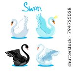beautiful drawing swan set... | Shutterstock .eps vector #794735038