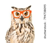 Stock photo portrait of an eagle owl with orange glasses seen from the front on a white background 794738095