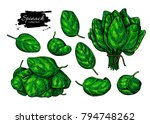 spinach leaves hand drawn set.... | Shutterstock . vector #794748262