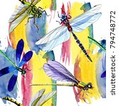 exotic dragonfly wild insect... | Shutterstock . vector #794748772