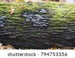 brittle cinder fungus ... | Shutterstock . vector #794753356