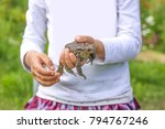 Child Touching Brown Toad In...