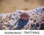 Small photo of Sea Urchin shell (Echinoderm) with bead pattern, on a rock, in Gialova Beach, Greece.