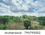beautiful vibrant background... | Shutterstock . vector #794795002
