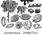 vector cocoa set on white... | Shutterstock .eps vector #794807212