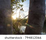 sunrise between tree branch ... | Shutterstock . vector #794812066