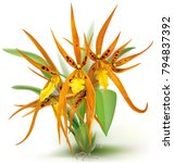 general view blooming brassada... | Shutterstock .eps vector #794837392
