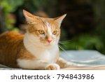 orange cat looking up something ... | Shutterstock . vector #794843986