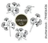 collection ginkgo biloba... | Shutterstock .eps vector #794856436