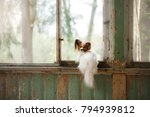 a small dog is sitting by ... | Shutterstock . vector #794939812