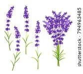 lavender flower set   Shutterstock .eps vector #794963485