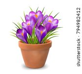 spring crocus colorful flowers... | Shutterstock .eps vector #794982412