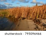 tall golden grass on the beach... | Shutterstock . vector #795096466