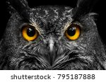 Stock photo black and white portrait owl with big yellow eyes 795187888