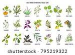 best medicinal herbs for... | Shutterstock .eps vector #795219322